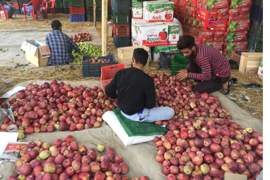 kashmir apple traders