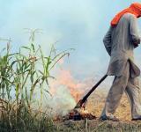 Air Pollution, health budget, Crop